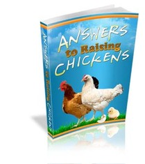 raising chicken